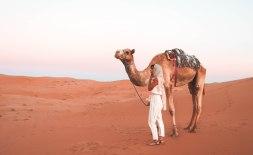 desertcamel