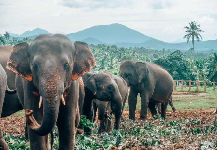 Do Not Go To Pinnwala Elephant Orphanage In Sri Lanka