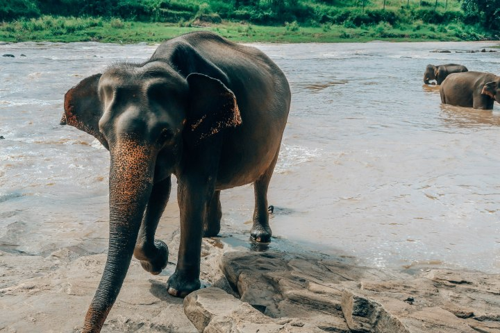 elephants-301.jpg