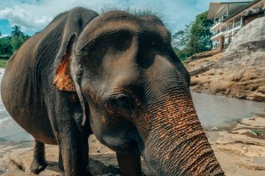 elephants-302