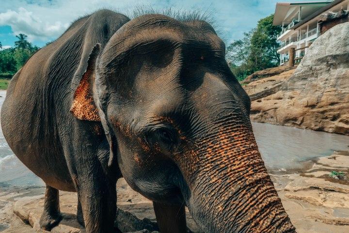elephants-302.jpg