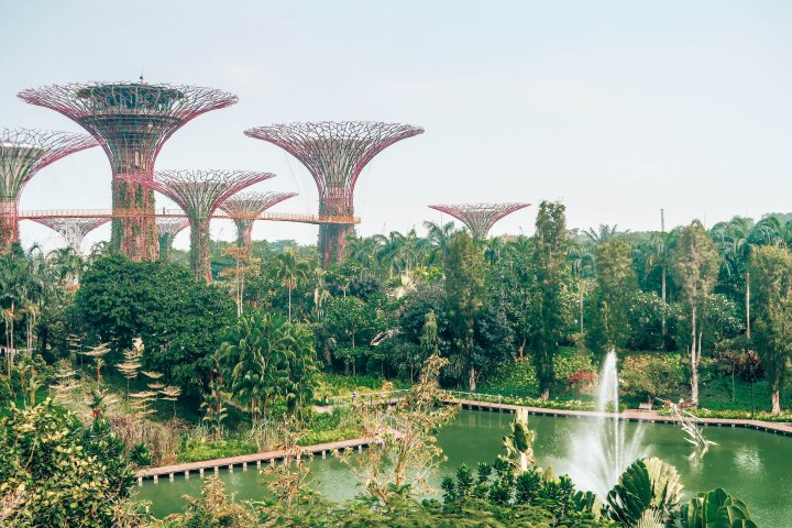 Top 5 Recommendations for a Trip toSingapore